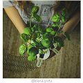 Click and Grow Bazalka