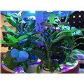 Plantui Booster Tray