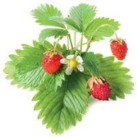 Click And Grow Lesní jahoda