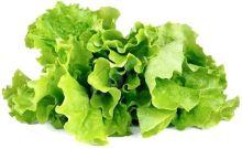 Click and Grow Hlávkový salát